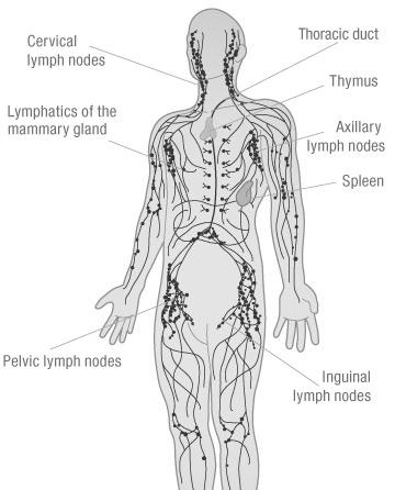 lymphatic drainage tool